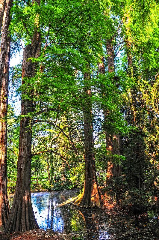 Trees at the Milan Public Park Milan Italy (Giardini