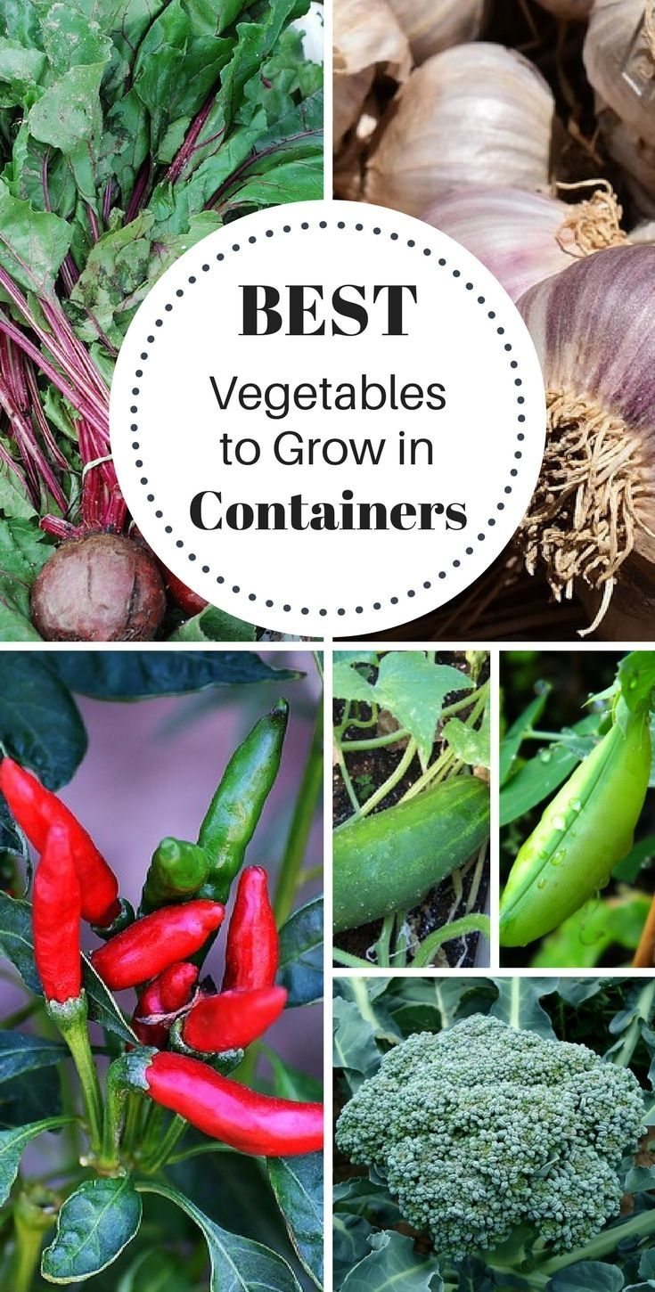 Vegetables That Grow In Containers These 16 vegetables are super easy to grow in containers. You'll need sunlight, good soil, water, and containers!These 16 vegetables are super easy to grow in containers. You'll need sunlight, good soil, water, and containers!
