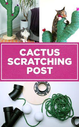 griffoir chat cactus