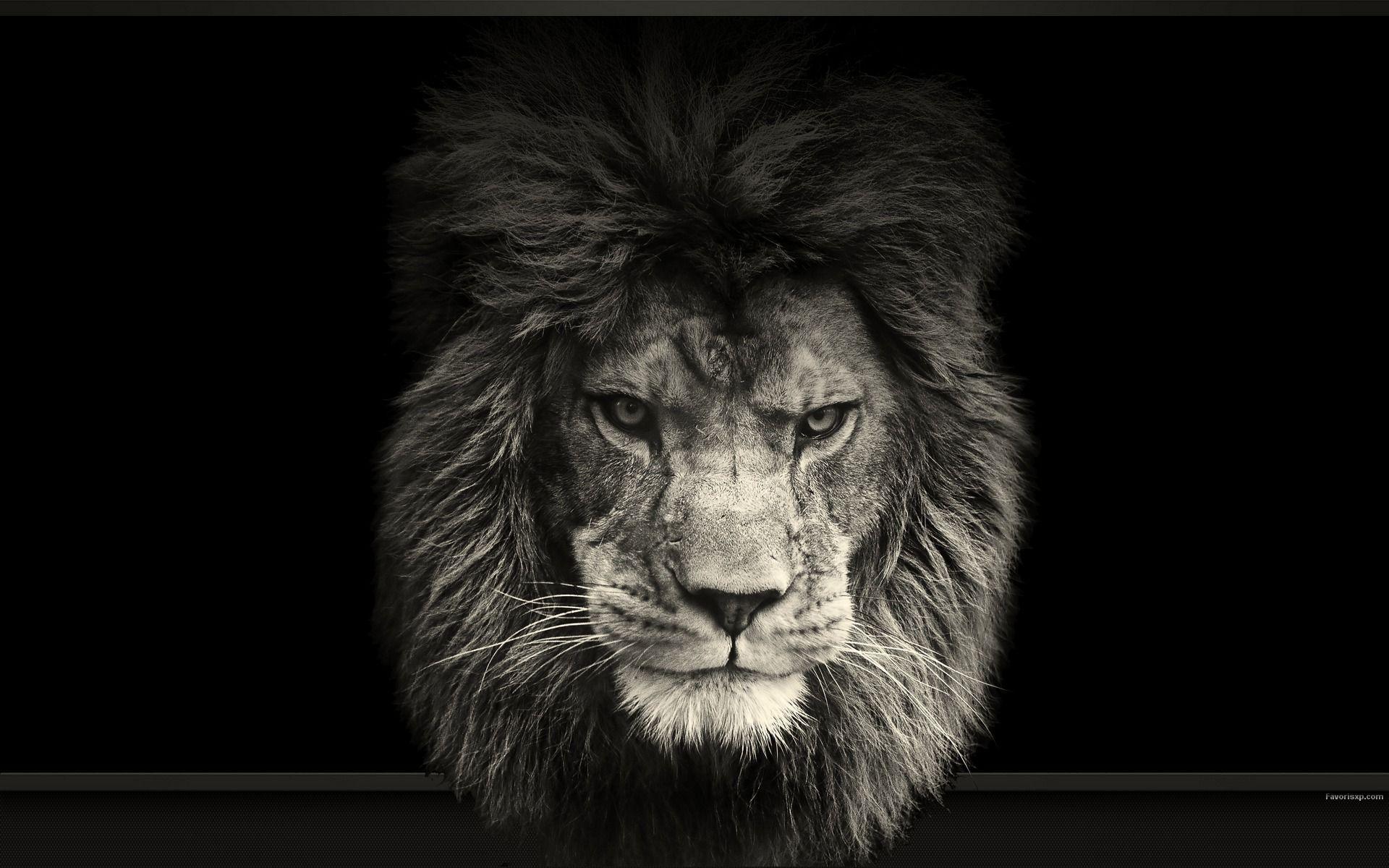 Epingle Par Caro Cocci Sur Noir Intense Noir Colore Animaux Noir Et Blanc Lion Noir
