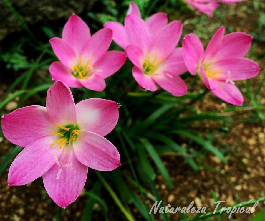 10 plantas bulbosas ideales para el jard n jardineria for 10 plantas ornamentales