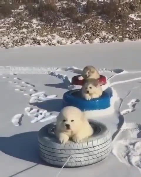 got7 dog by Brenda