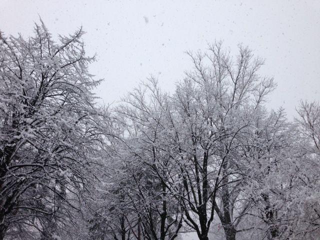 Jede Menge Neuschnee in Meran!