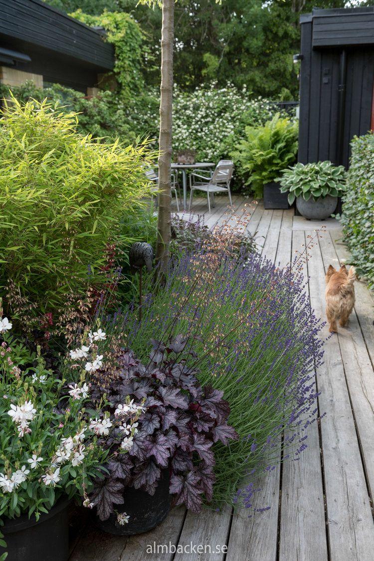 trädäck och summersnow almbacken trädgårdsdesign on inspiring trends front yard landscaping ideas minimal budget id=61089