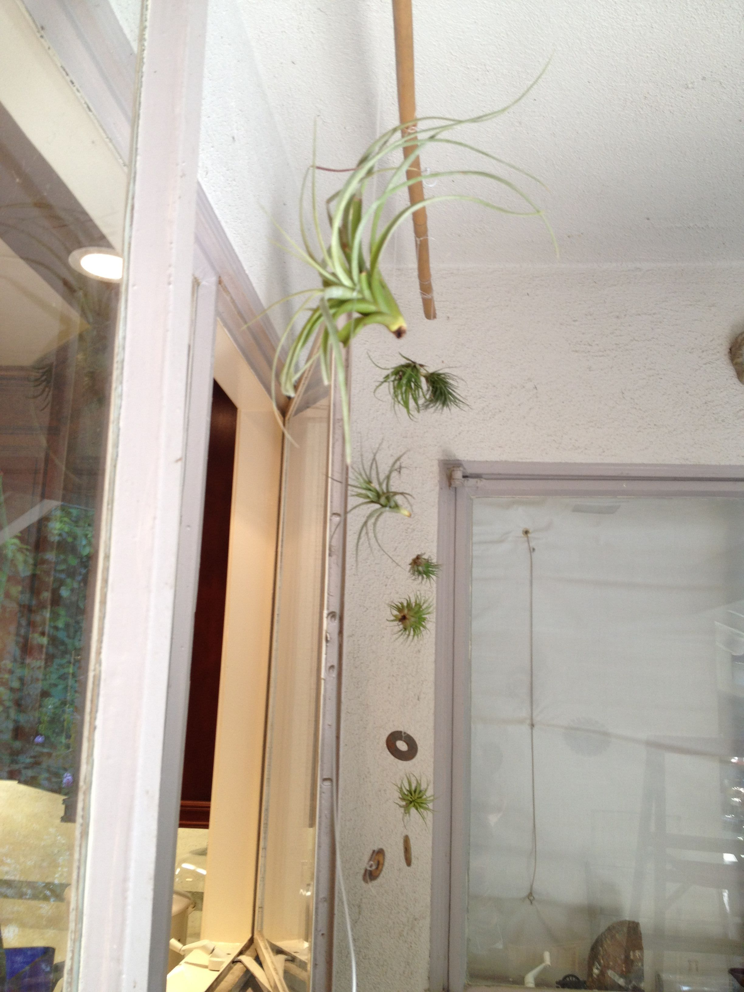 Another View From Outside Air Plants Decor Home Decor