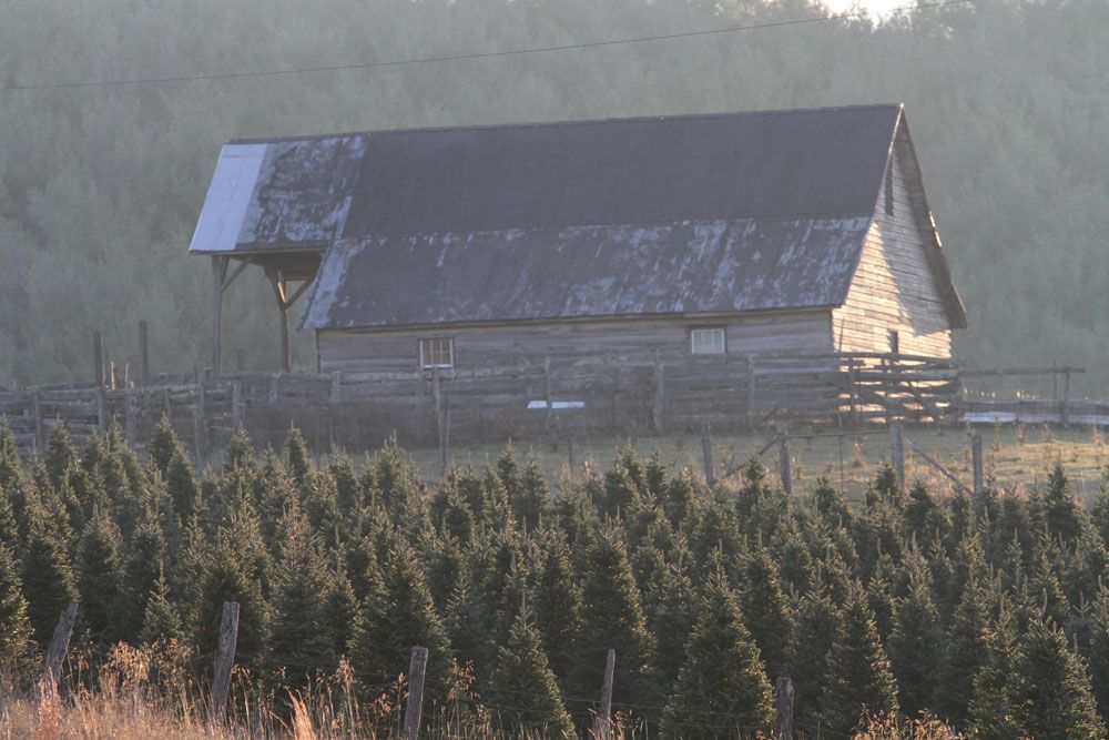 Virginia Tree Farms - Virginia Is For Lovers (With images ...