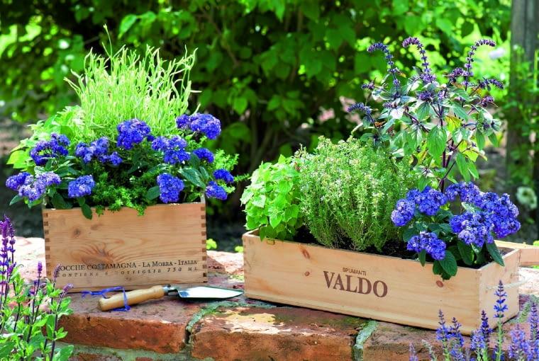 Gleere Prosecco Kiste Und Weinkiste Als Geschenkkaesten Umfunktioniert In 2020 Plants Herbs