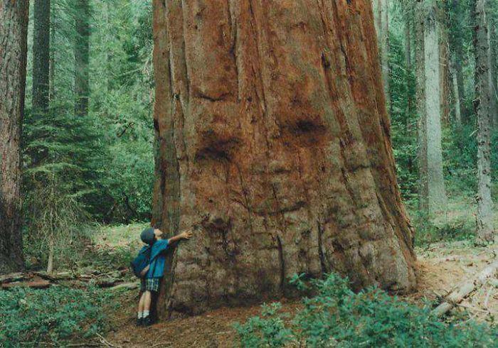 Big ass forest