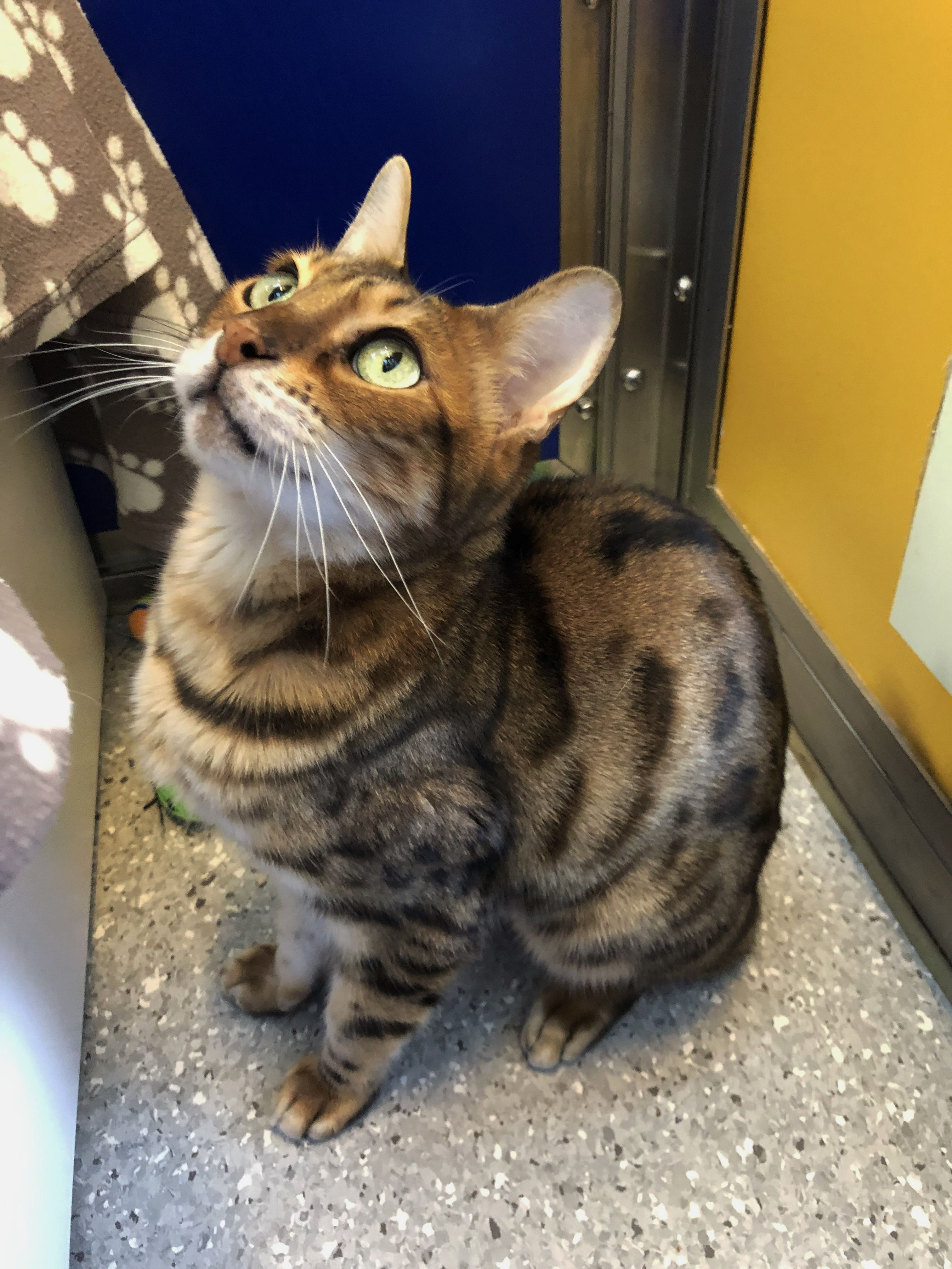 Rehome a cat Willow National animal, Cattery, Cats