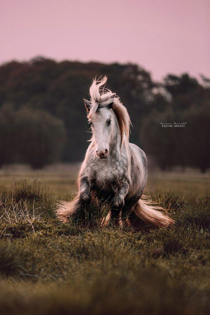 Portfolio – Best Of – Carina Maiwald EQUINE IMAGES