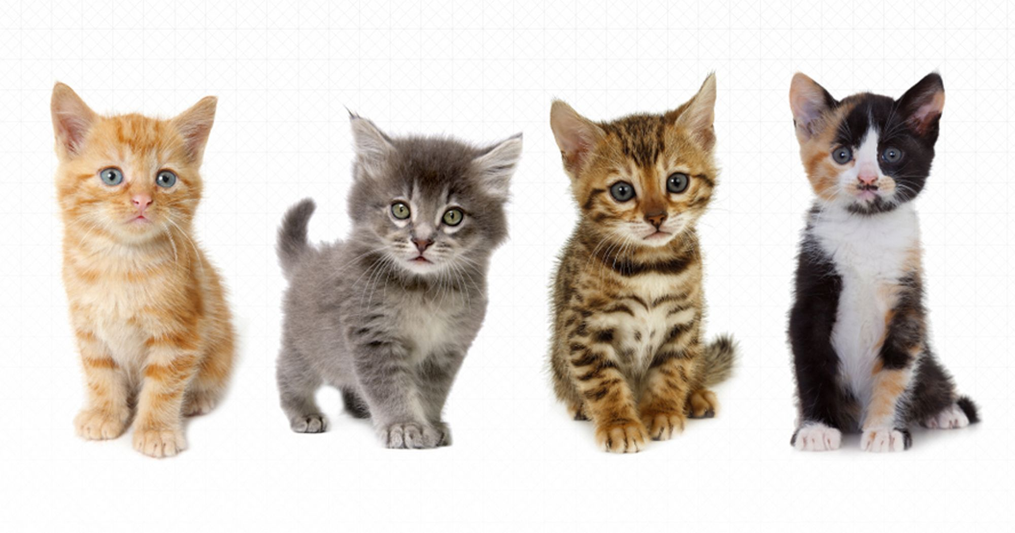 You Can Now Order Kittens With Uber National cat day