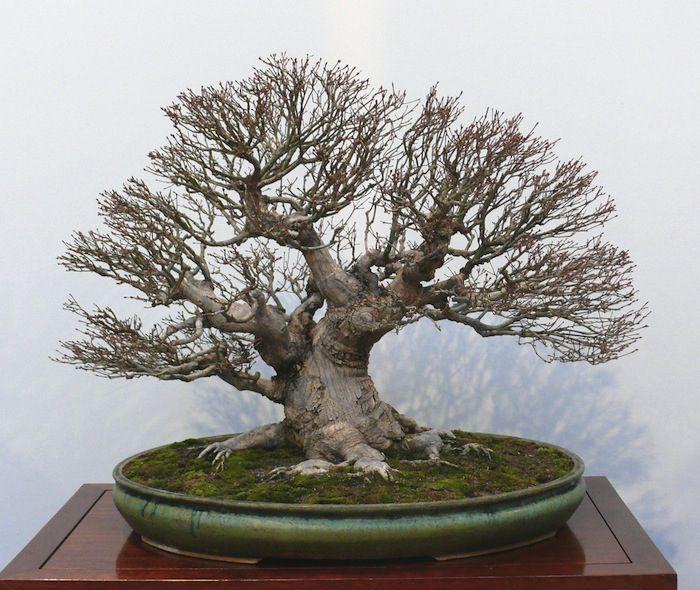 Broom bonsai-Hokidashi