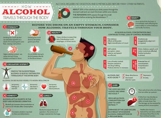 How Alcohol Travels Thru the Body Infographic