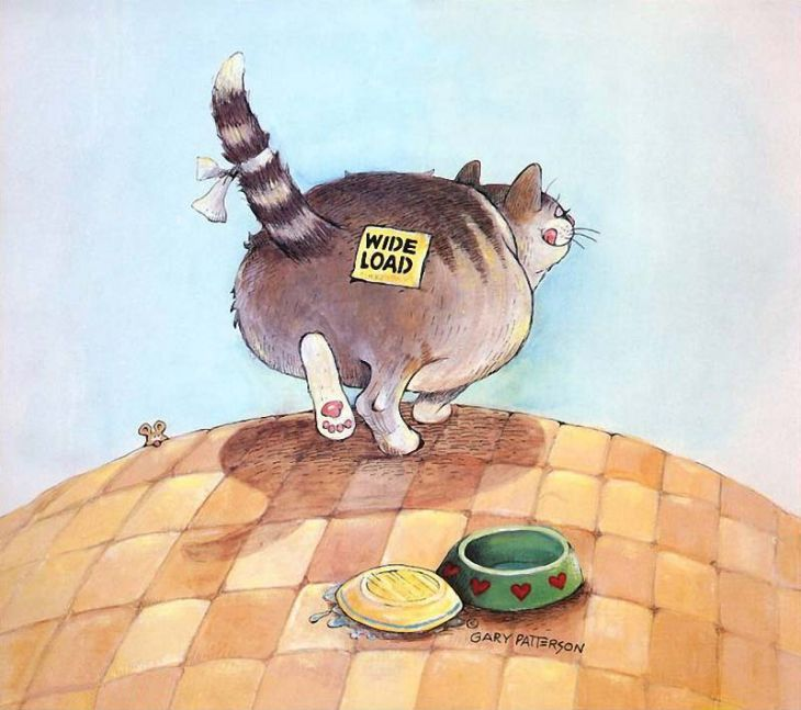 Прикольные рисунки коты кошки, для