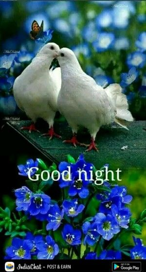 Good Night Friends Sleep Well Sweet Dreams And God Bless