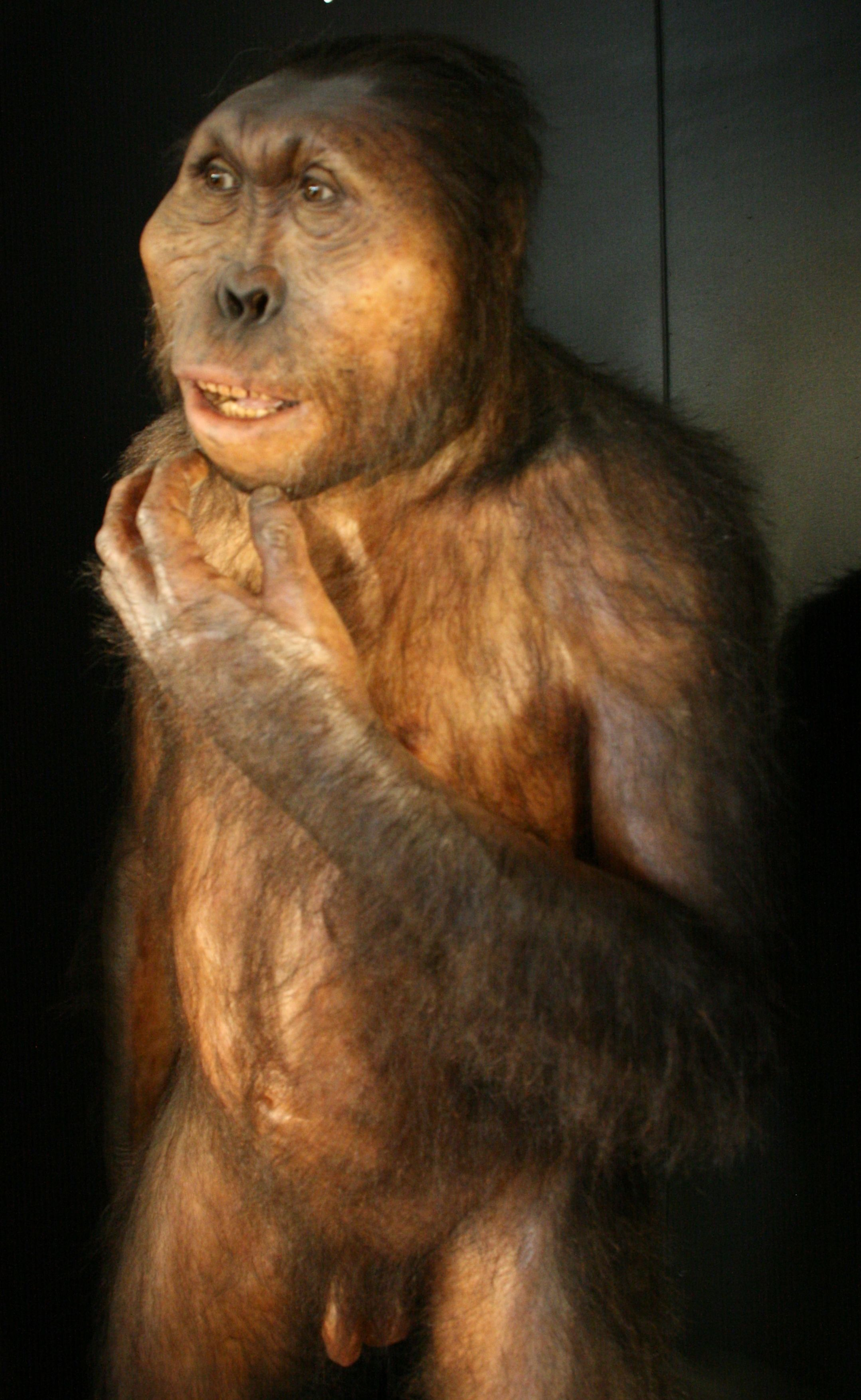 Australopithecus africanus taung child dating 6