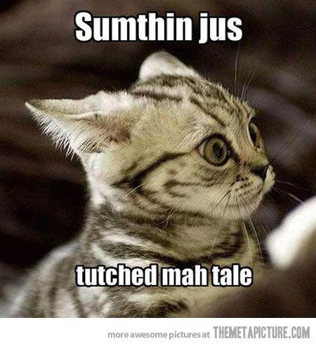 Startled Kitten Funny Cats
