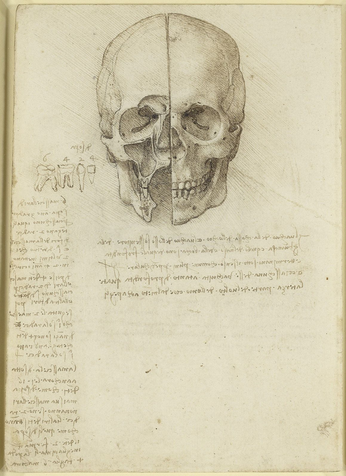 Leonardo da Vinci, 1452-1519, Italian, The skull sectioned, 1489 ...