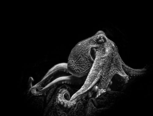 sombreboite: Underwater by Virginia Saunders | Octopus | Pinterest ...