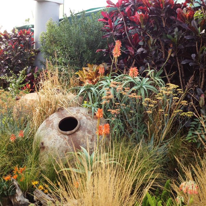 indigenous gardens south africa - Google Search | Garden ...
