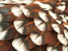 chicken feathers - Yahoo Search Results Yahoo Image Search Results