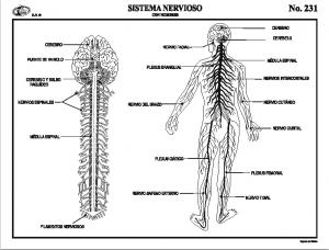 Esquema aparato circulatorio con nombres materiales didacticos grupo editorial raf material didactico y recreativo urtaz Images