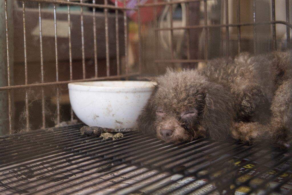 Puppy mill rescue nc