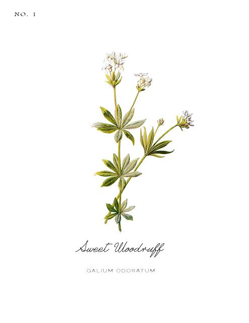 Free Vintage Inspired Botanical Printables Printables Flower