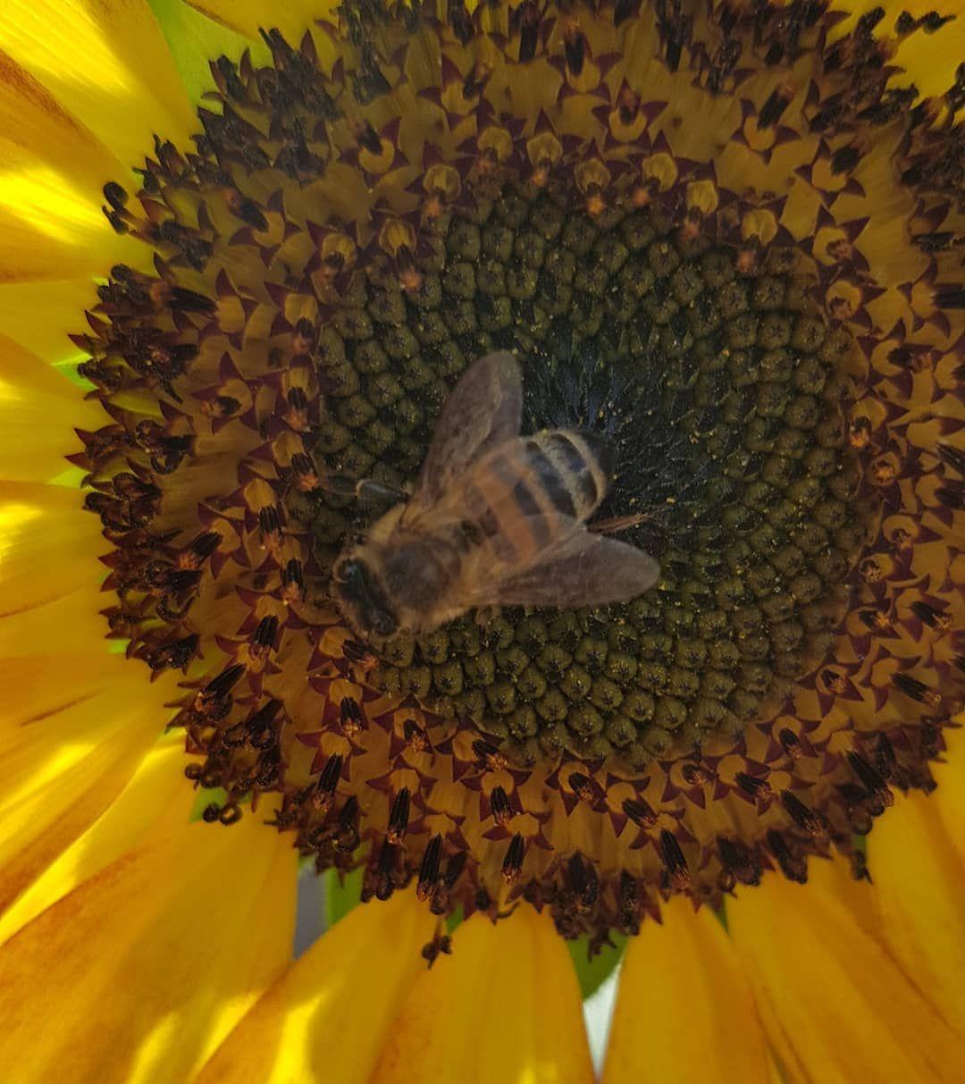 Moin Ein Bisschen Sonne In Form Einer Sonnenblume Für