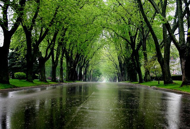 Spring Showers With Images Spring Shower Spring Magic Photo