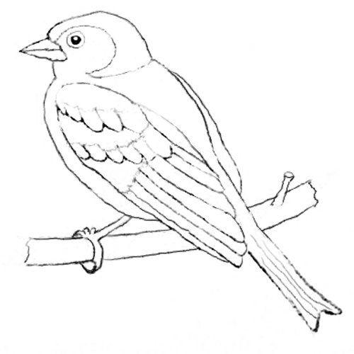 Buchfink Als Ausmalbild Black And White Ausmalbilder Vögel