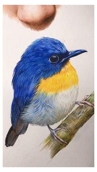 bird drawing realistic