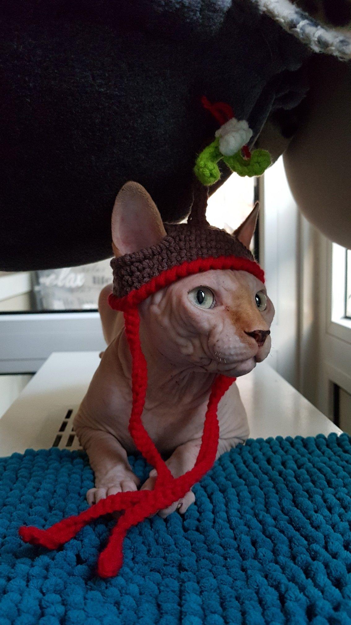Mistletoe Hat Crochet Cat Crochet Cat Hat Hairless Cat