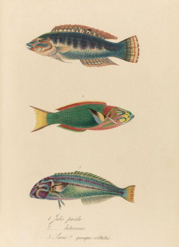 Free Vintage Printable Aquatic Images Via Remodelaholic Com Printable Ocean Coastal