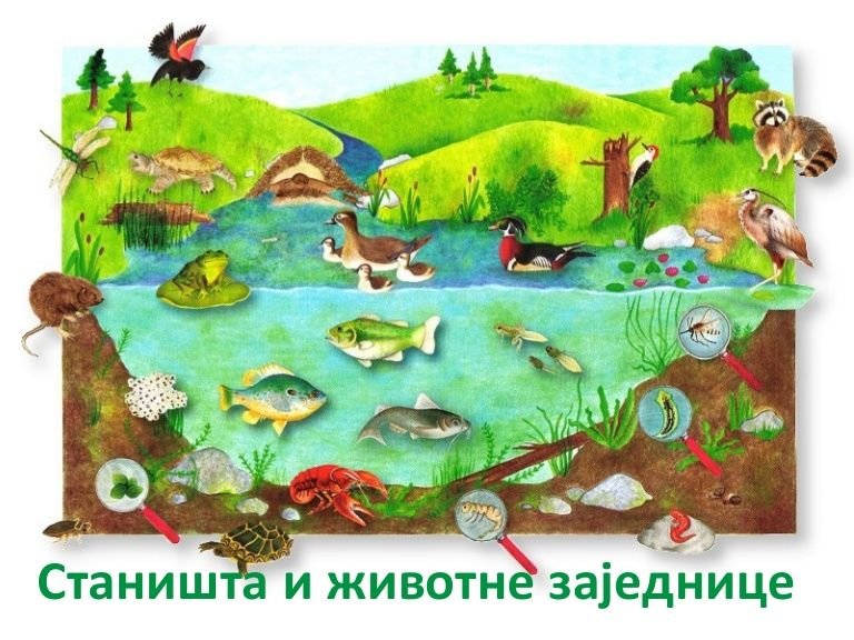 Priroda I Drustvo 3 Razred Pond Animals