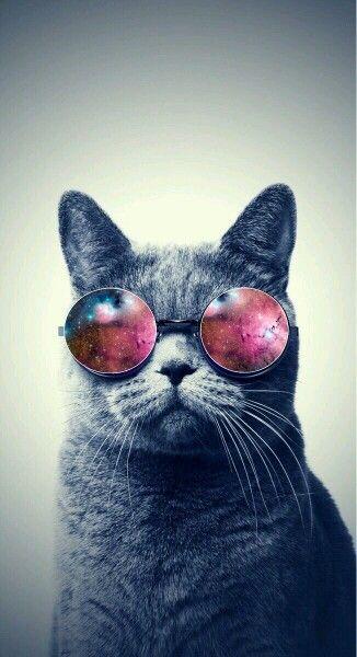 Galaxy Cat Iphone Wallpaper