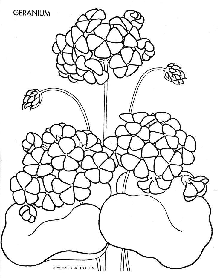 geraniumjpg jpeg 736 931 65 adult coloringcoloring bookcolouringdrawing