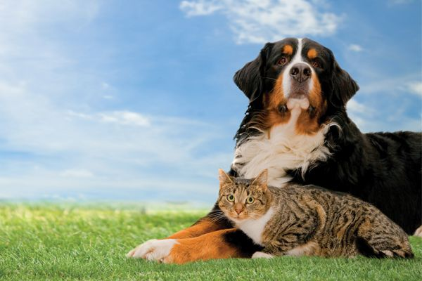 Organic Pet Supplies Online Shopping Chennai Organic Pet Supplies Like Pet Shampoo Pet Soap Etc Dogs Dog Cat Cat Grass