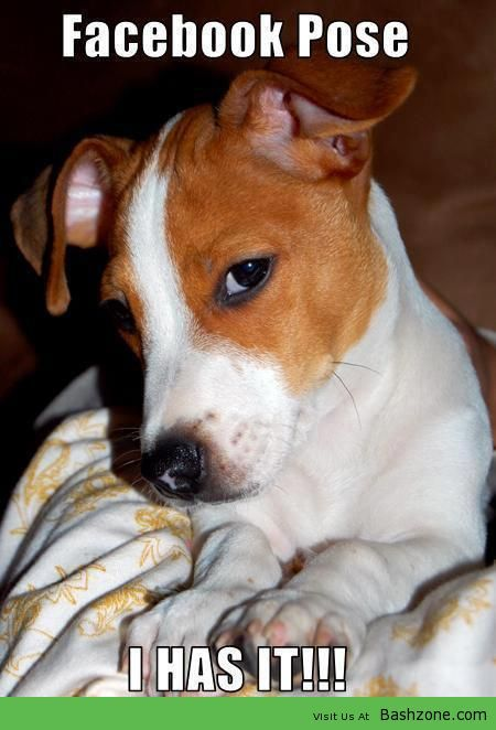 Quotes On Images Your Daily Doze Of Inspiration Jack Russell