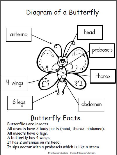 butterfly diagram science pinterest diagram students and rh pinterest com diagram of a butterfly for grade one diagram of a butterfly with label