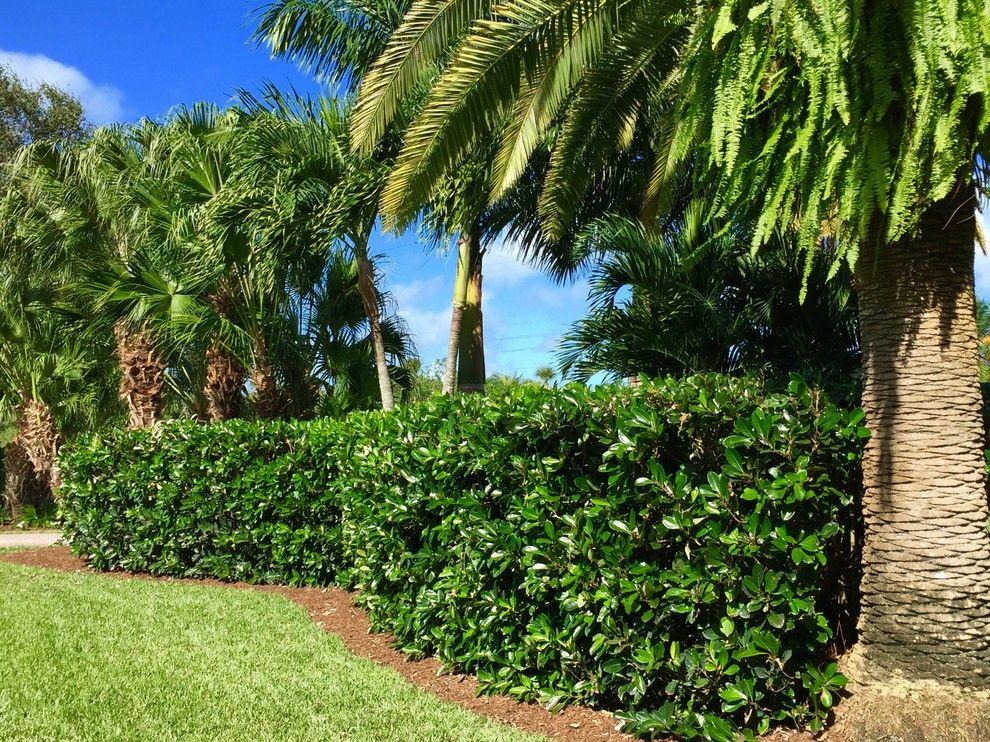 Remarkable modern garden design nz on Garden server # ...
