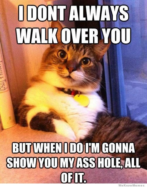 I Don't Always Walk Over You But When I Do…
