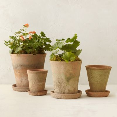 Earth Fired Clay Herb Pot + Saucer, Terracotta 5-9""