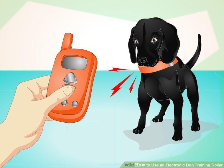 using dog training collars