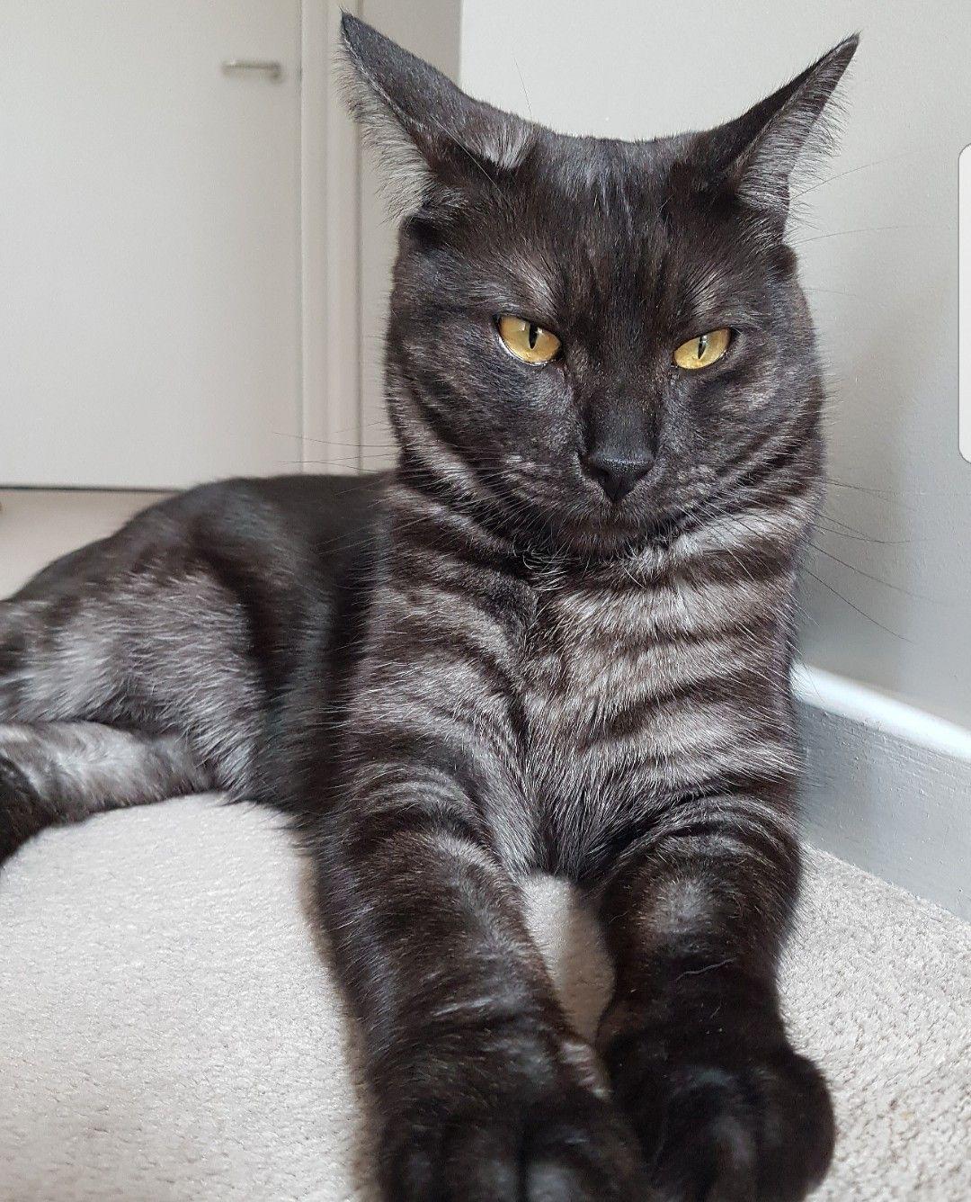 Pin On Rare Black Cats