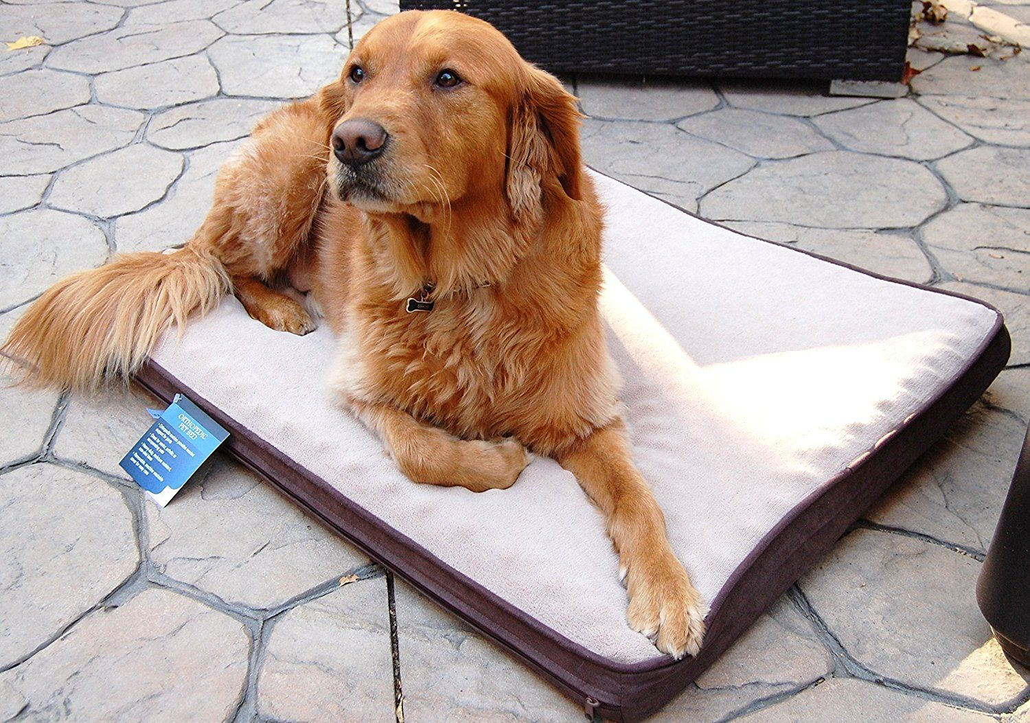 Carpenter Lee 30 By 40 Inch Orthopedic Pet Bed With 4 Inch Gusset Large Off White Chocolate Hurry Check Out Thi Orthopedic Pet Bed Pet Bed Cool Dog Beds