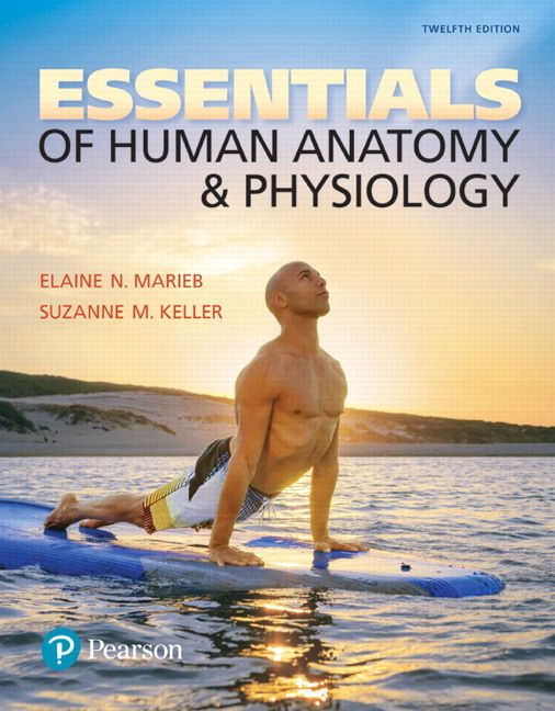 Essentials of Human Anatomy and Physiology 12th Edition Marieb Test ...