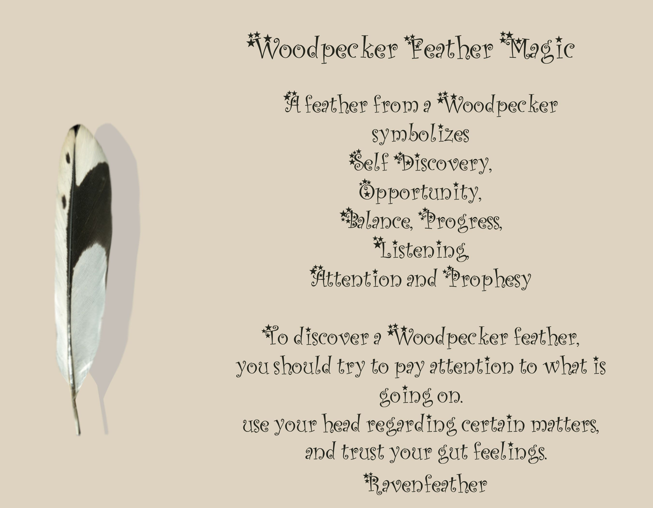 Feather Meanings Wicca Feath