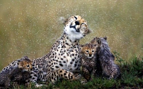 shower from the mother