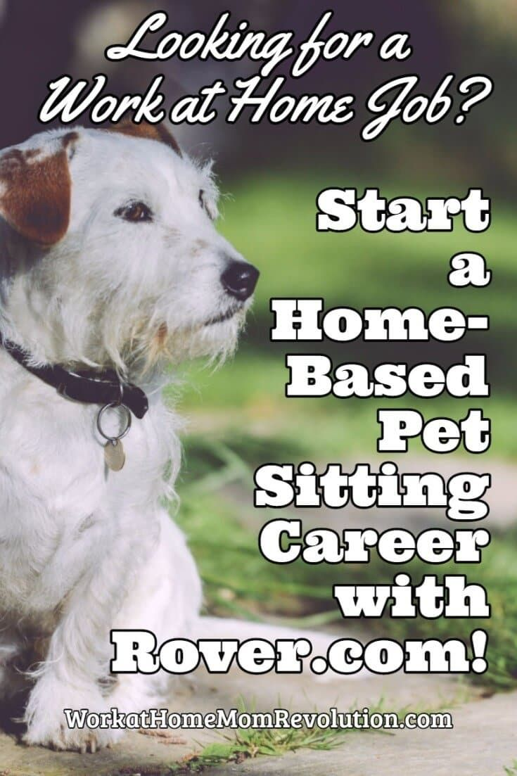 HOW TO START A HOMEBASED DOG WALKING BUSINESS